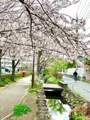 桜が満開だった1週間ほど前。_f0167026_21002637.jpg