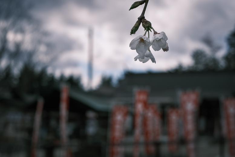 covid-19終息を祈る桜_f0265234_21564334.jpg