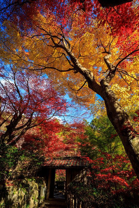 紅葉が彩る滋賀2019 教林坊・秋の大団円_f0155048_21355950.jpg