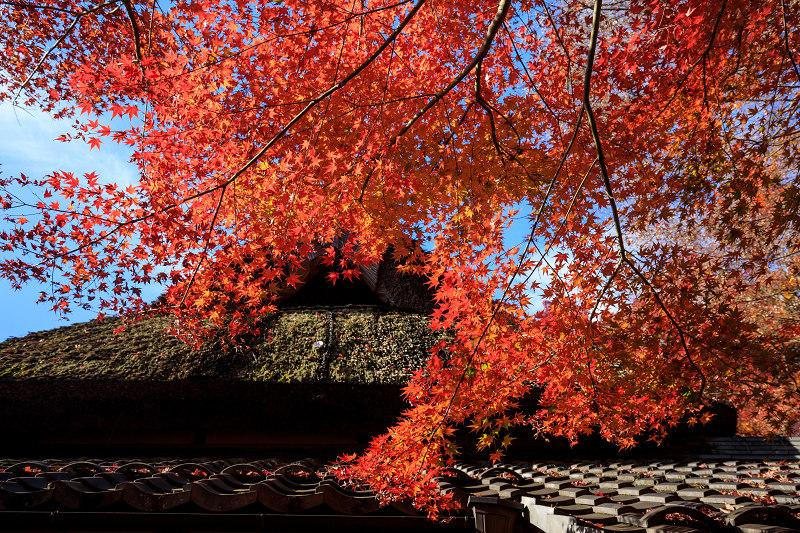 紅葉が彩る滋賀2019 教林坊・秋の大団円_f0155048_21362126.jpg