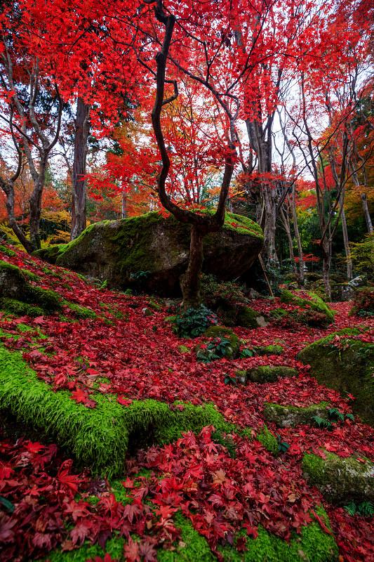紅葉が彩る滋賀2019 教林坊・秋の大団円_f0155048_21545352.jpg