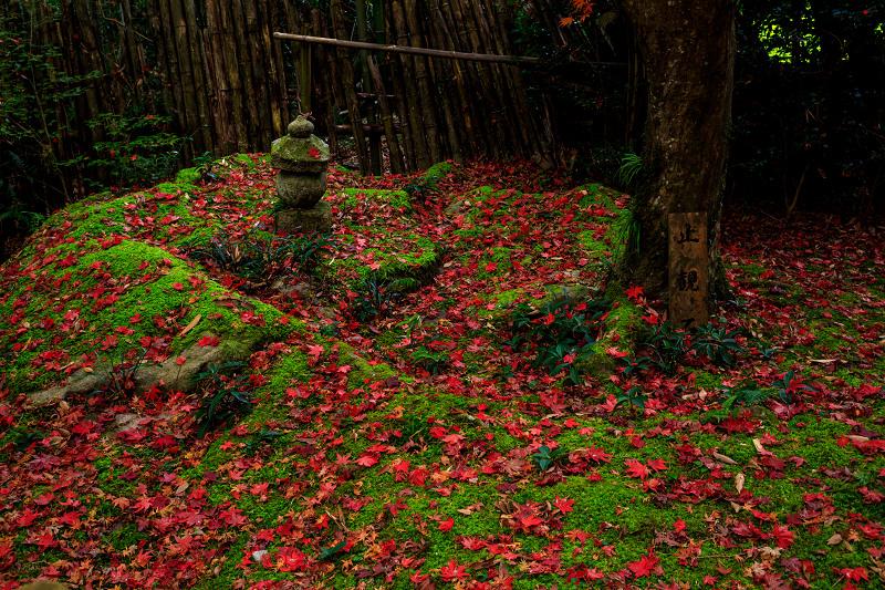 紅葉が彩る滋賀2019 教林坊・秋の大団円_f0155048_21554589.jpg