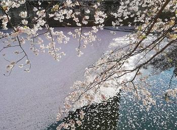 花まつり&満月_a0061057_015497.jpg