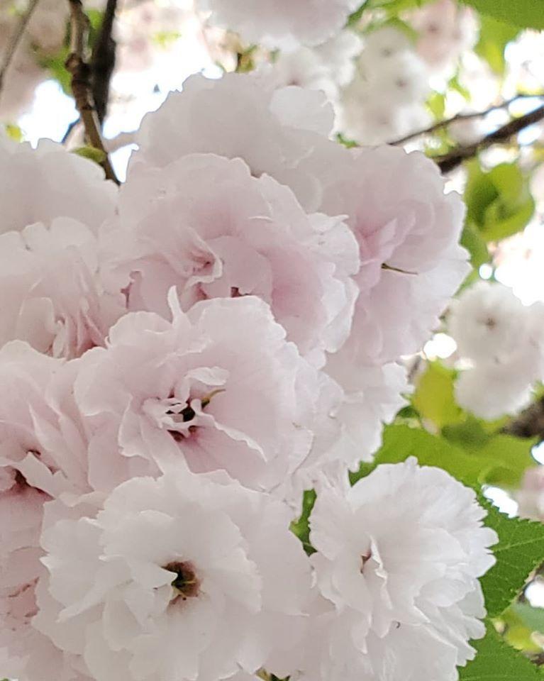 緊急事態宣言8日目。。。渋谷のラジオ☆明日4月16日☆12時よりナビゲーター&パーソナリティーとしてコロナと戦っている近況をお話させていただきます*++☆*+☆*+  _a0053662_17425534.jpg