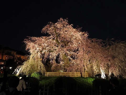 「足袋」に誘われた京の旅。_b0141773_23570282.jpg