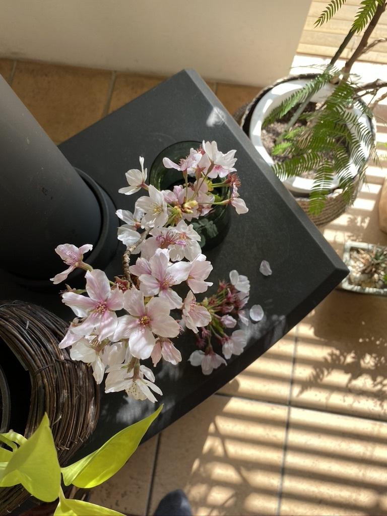 『薪ストーブ周りを春仕様に』&『桜吹雪の舞う午後の裏山』_c0334574_14580644.jpeg