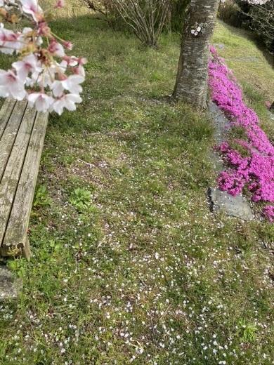 『薪ストーブ周りを春仕様に』&『桜吹雪の舞う午後の裏山』_c0334574_14585185.jpeg