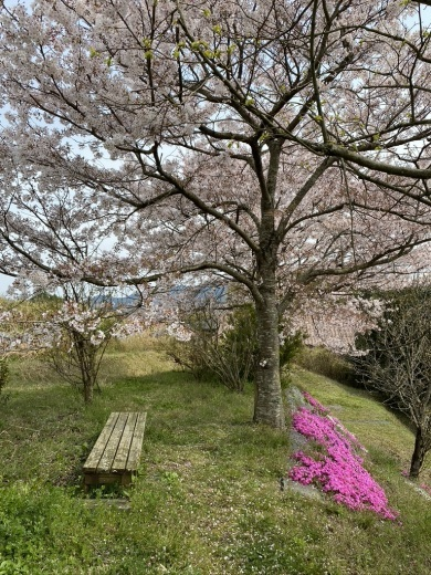 『薪ストーブ周りを春仕様に』&『桜吹雪の舞う午後の裏山』_c0334574_14590472.jpeg