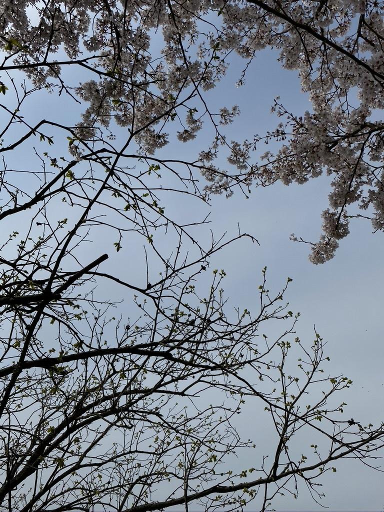 『薪ストーブ周りを春仕様に』&『桜吹雪の舞う午後の裏山』_c0334574_14593696.jpeg