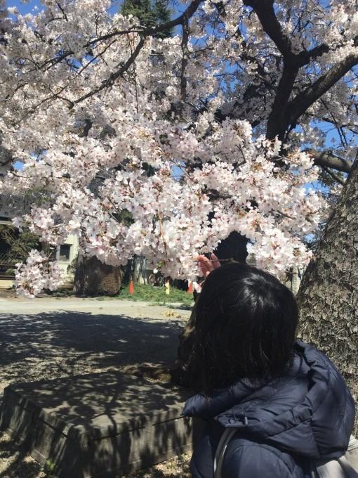空と桜と…。_c0186983_16574673.jpg