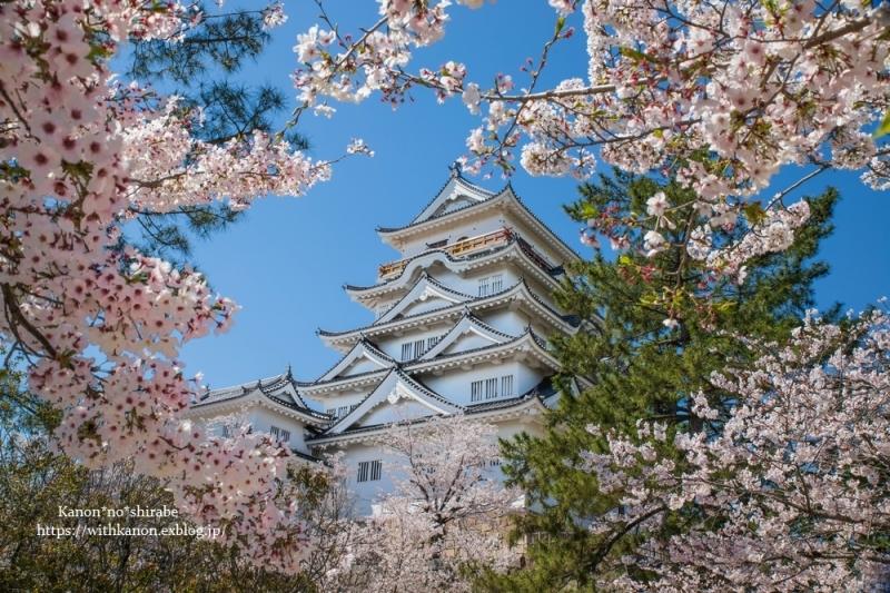 今年も桜の季節に_d0148187_15240515.jpg