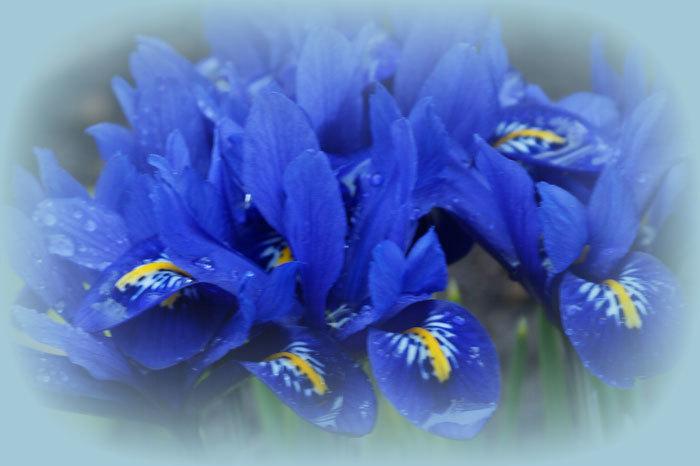 庭の花_d0162994_08294555.jpg