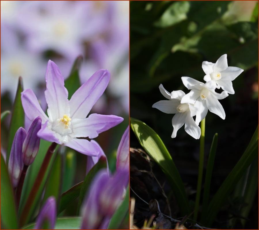 庭の花_d0162994_08324036.jpg