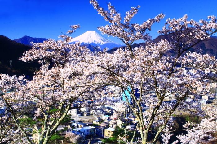令和2年4月の富士 (4) 岩殿山の桜と富士_e0344396_20481986.jpg
