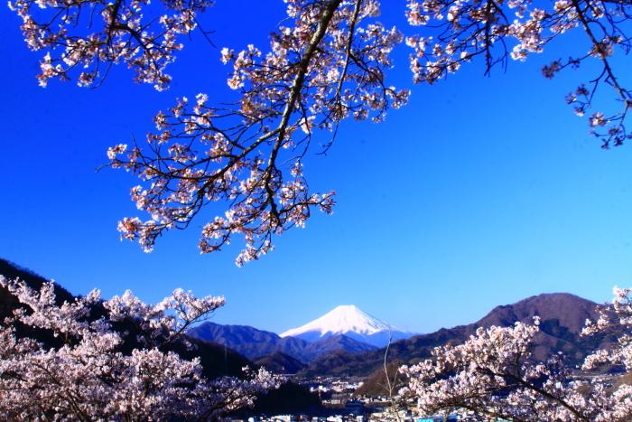 令和2年4月の富士 (4) 岩殿山の桜と富士_e0344396_20481999.jpg