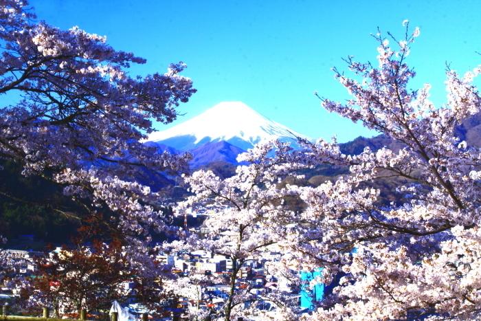 令和2年4月の富士 (4) 岩殿山の桜と富士_e0344396_20482007.jpg