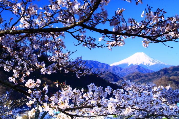 令和2年4月の富士 (4) 岩殿山の桜と富士_e0344396_20482053.jpg