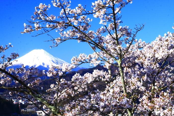 令和2年4月の富士 (4) 岩殿山の桜と富士_e0344396_20482126.jpg