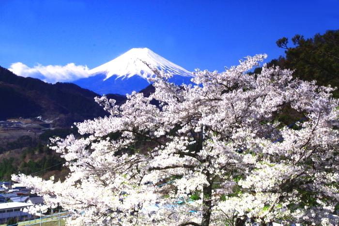 令和2年4月の富士 (5) 真木福正寺の桜と富士_e0344396_22050826.jpg