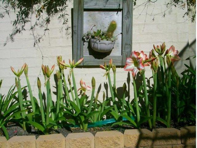楽をして花を咲かせる_f0346196_10525672.jpg