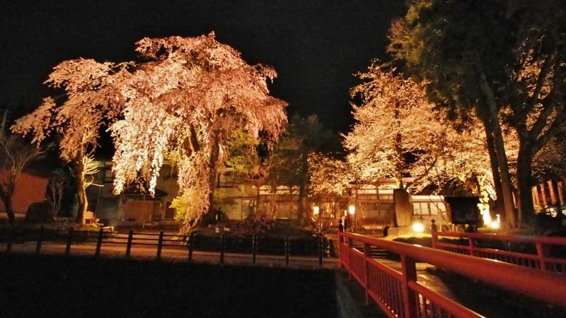 「深淵の桜」を観に千手院の境内へ ④_c0336902_14452927.jpg