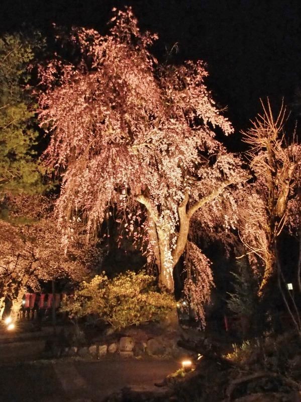 「深淵の桜」を観に千手院の境内へ ④_c0336902_14453328.jpg