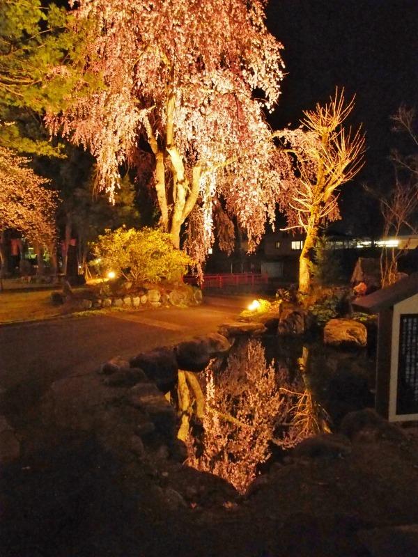 「深淵の桜」を観に千手院の境内へ ④_c0336902_14453747.jpg