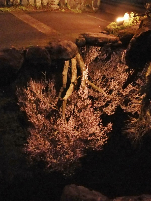 「深淵の桜」を観に千手院の境内へ ④_c0336902_14454056.jpg