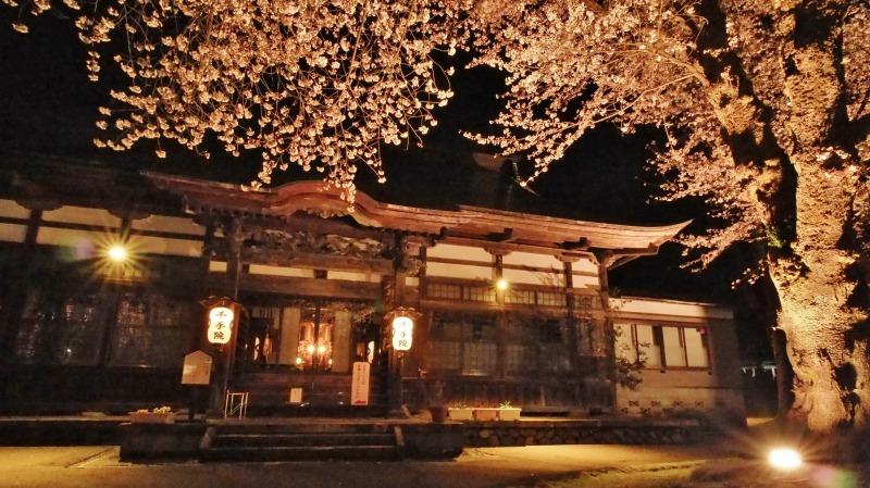 「深淵の桜」を観に千手院の境内へ ④_c0336902_14454486.jpg