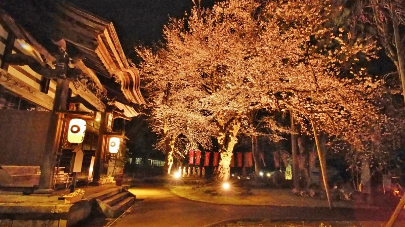 「深淵の桜」を観に千手院の境内へ ④_c0336902_14454866.jpg