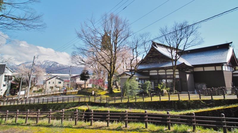 枝垂れ桜 昨日は7分咲きくらいでしょうか ⑤_c0336902_15041447.jpg