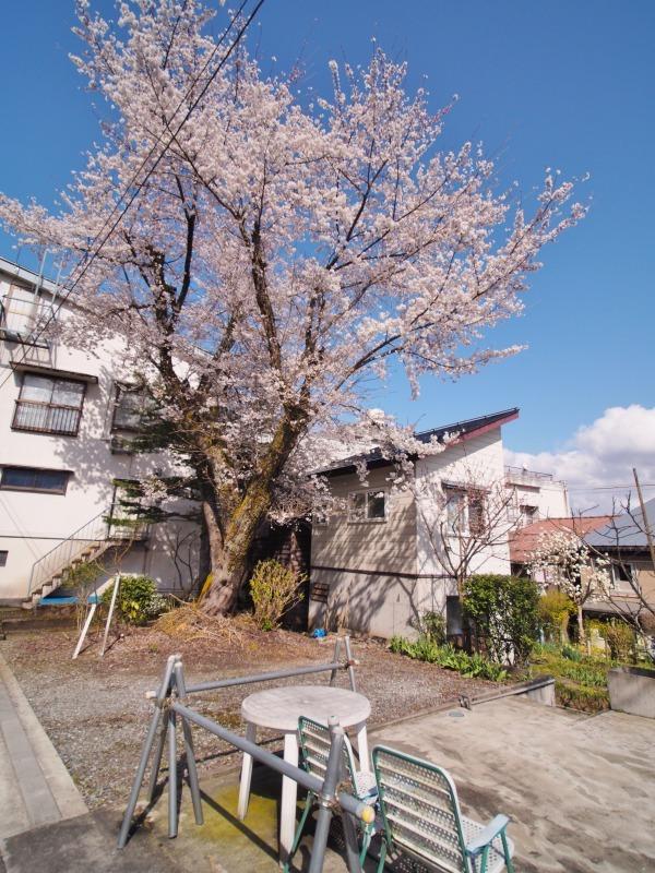 枝垂れ桜 昨日は7分咲きくらいでしょうか ⑤_c0336902_15043095.jpg