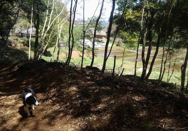 里山散歩_d0224111_15191004.jpg