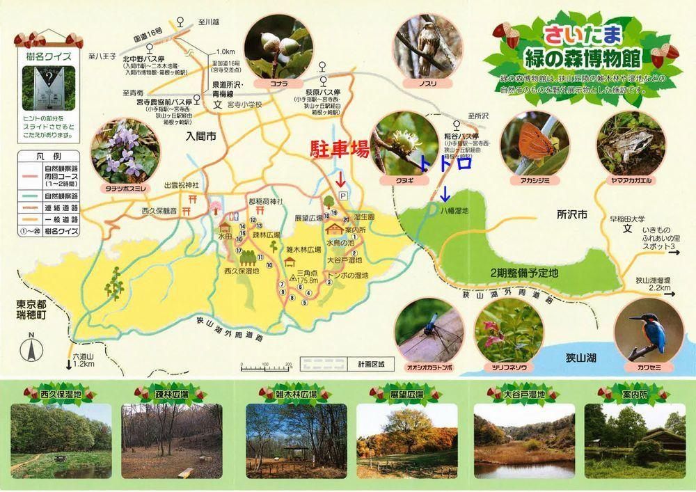 里山散歩_d0224111_15320071.jpg