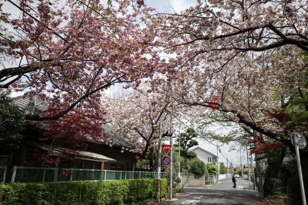 八重桜が咲いていた_a0390712_18430113.jpg