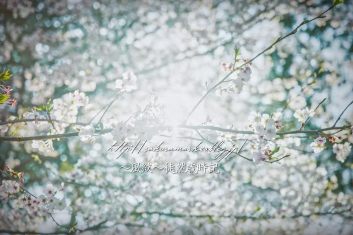 散りゆく刻、春の終わり。_f0235723_19422269.jpg