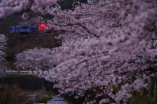 4月4日 桜×サンライズExp.のリベンジ!_f0037227_22090465.jpg