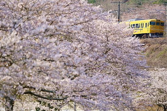 4月4日 桜×サンライズExp.のリベンジ!_f0037227_22092457.jpg