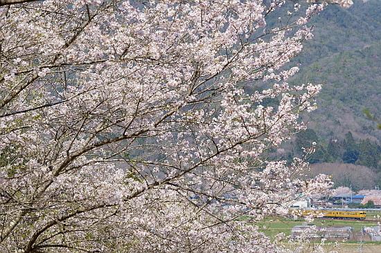 4月4日 桜×サンライズExp.のリベンジ!_f0037227_22092485.jpg