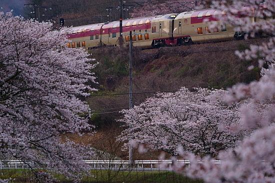 4月4日 桜×サンライズExp.のリベンジ!_f0037227_22092497.jpg