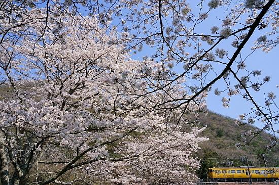 4月4日 桜×サンライズExp.のリベンジ!_f0037227_22092526.jpg