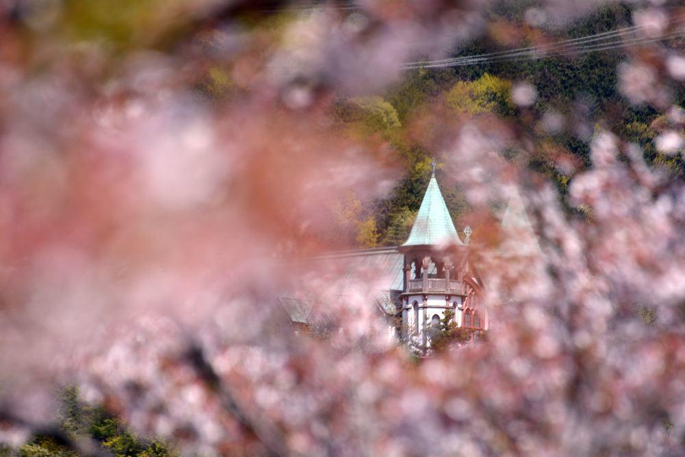 入鹿池端の桜と聖ヨハネ教会堂_e0373930_16255596.jpg