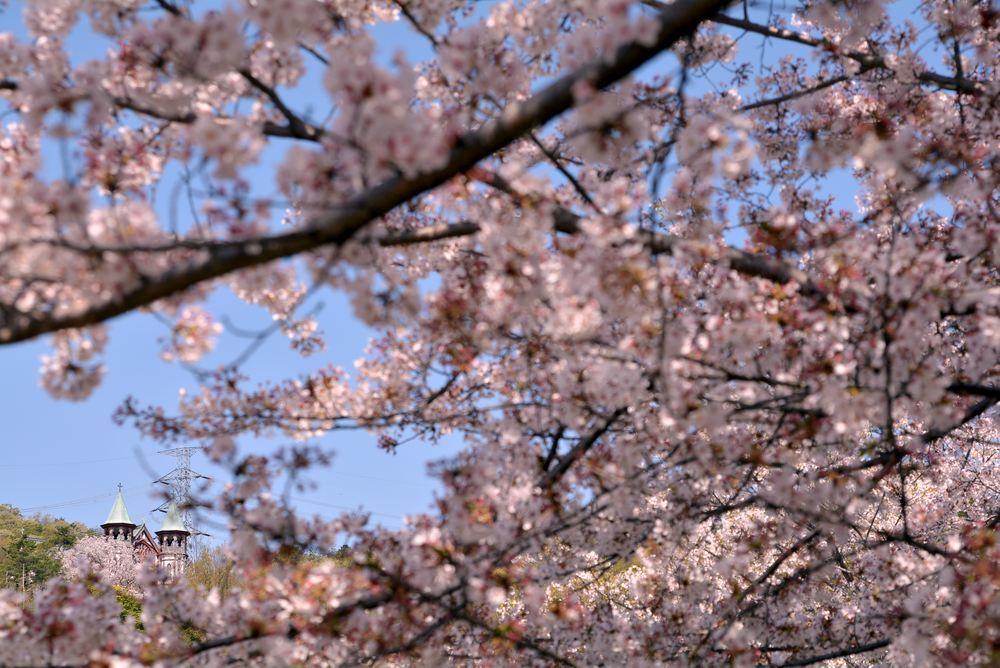入鹿池端の桜と聖ヨハネ教会堂_e0373930_16255643.jpg