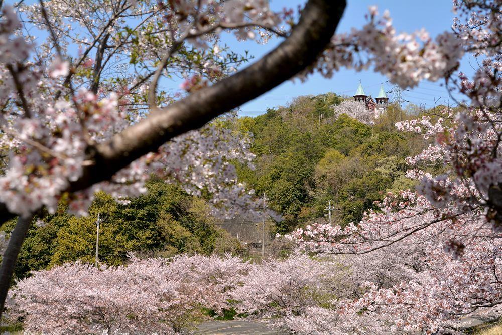 入鹿池端の桜と聖ヨハネ教会堂_e0373930_16255693.jpg