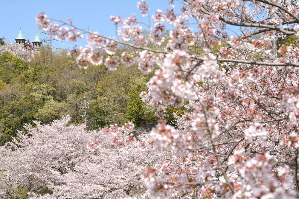 入鹿池端の桜と聖ヨハネ教会堂_e0373930_16255695.jpg