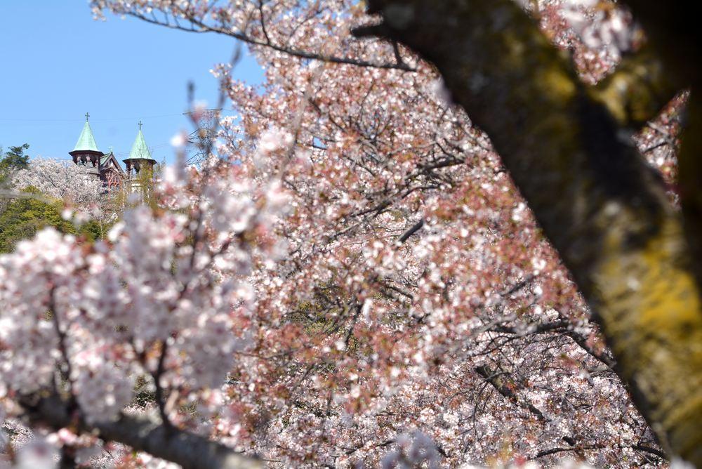 入鹿池端の桜と聖ヨハネ教会堂_e0373930_16264278.jpg