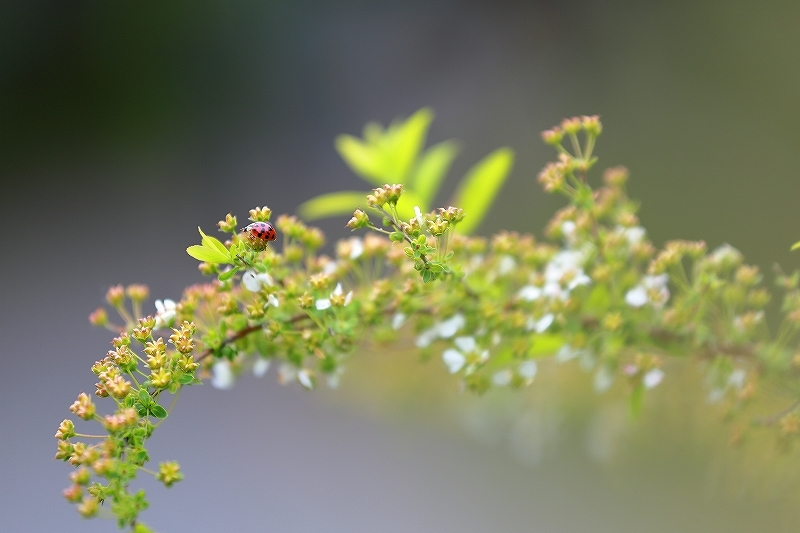 近所の春(1)_f0348831_21085796.jpg