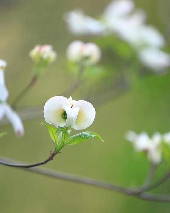 近所の春(1)_f0348831_21090606.jpg