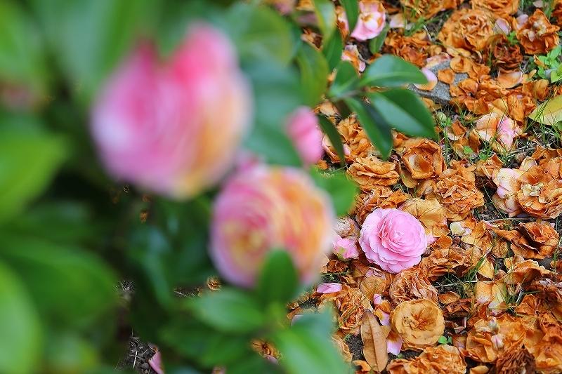 近所の春(1)_f0348831_21091111.jpg