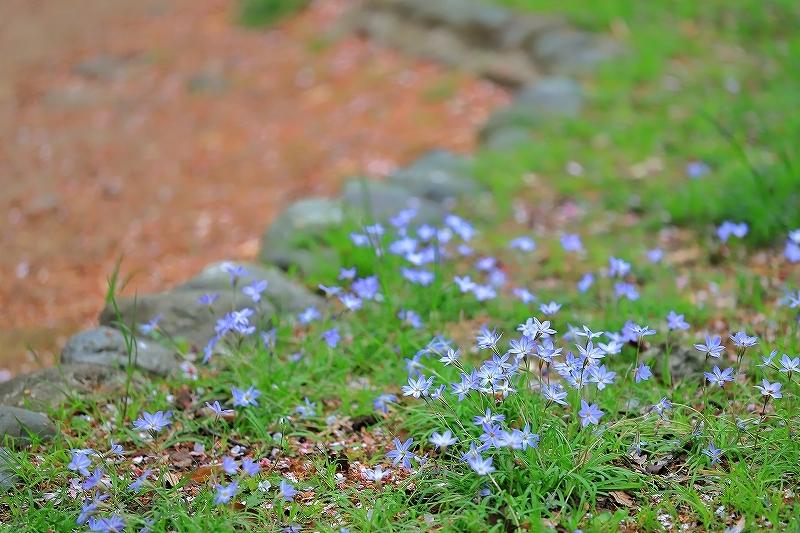 近所の春(1)_f0348831_21091126.jpg